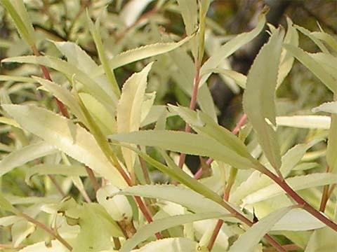 謎の白い植物